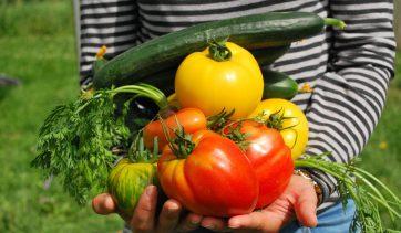 3 maneiras de fazer uma mini horta em casa | Use Orgânico