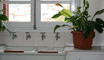 5 plantas comuns que purificam o ar da sua casa