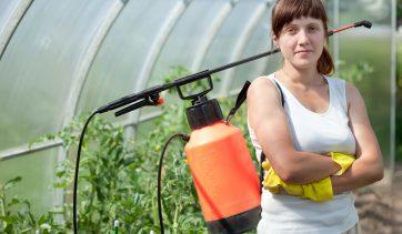 Você sabe o que é inseticida natural, para que serve e como fazer?